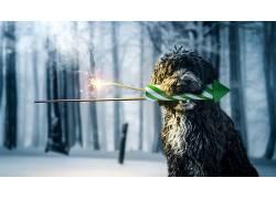 冬季,雪,狗,动物611710