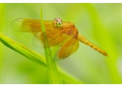 动物,昆虫,宏,植物439788