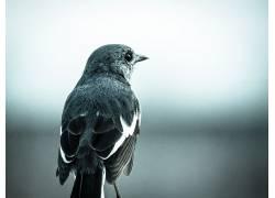 动物,Gautam Lakra,鸟类,羽毛,特写,景深598594