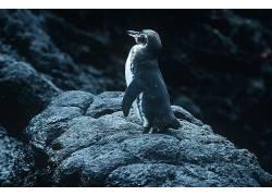 动物,企鹅,性质,岩,石头388883