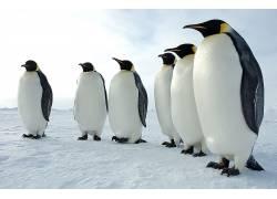 动物,企鹅,雪614143