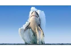 动物,海,鲨鱼,跳跃,獠牙,地平线,晴朗的天空,给予,数字艺术540431