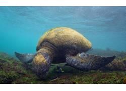 动物,海,龟,水下,伊斯拉斯加拉帕戈斯492174