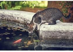 动物,哺乳动物,猫,池塘,花园438254