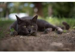 动物,哺乳动物,猫438240