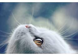 动物,哺乳动物,猫438361