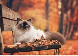 动物,哺乳动物,猫的,树叶,猫452195