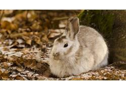 动物,兔449575