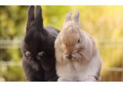 动物,兔450422