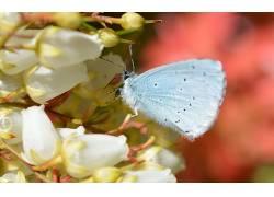动物,昆虫,鳞翅类,宏376740