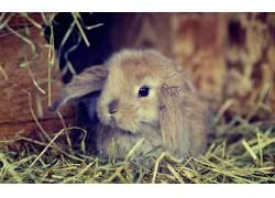 动物,兔450424