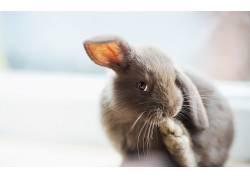 动物,兔470172