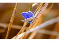 动物,昆虫,鳞翅类452157