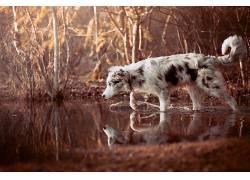 动物,反射,性质,狗529611
