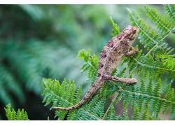 动物,树叶,爬行动物,变色龙449798
