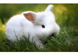 动物,哺乳动物,兔,草379646