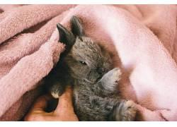 动物,哺乳动物,兔438400