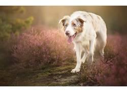 动物,植物,在户外,狗,舌头495387