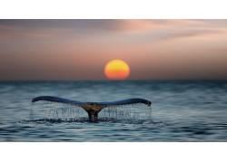 动物,哺乳动物,太阳,海,水439784