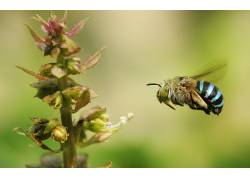 动物,植物,宏,昆虫,蜜蜂440134