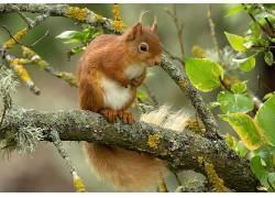 动物,哺乳动物,树叶,松鼠452164
