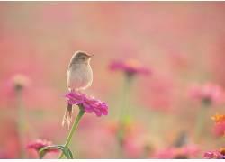 动物,植物,花卉,鸟类375976