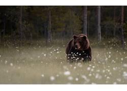 动物,哺乳动物,森林,熊375969