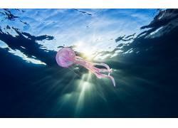 动物,水下,性质,海,海蜇524528