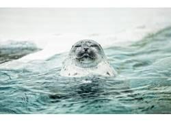 动物,哺乳动物,海,海狮379962