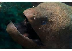 动物,水下,海鳗675224