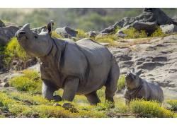 动物,哺乳动物,犀牛378972