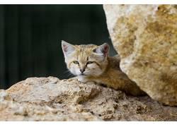 动物,哺乳动物,猫的,猫396505