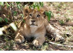 动物,哺乳动物,猫的379663