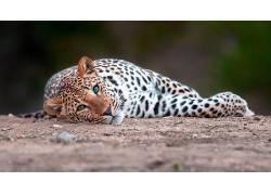 动物,哺乳动物,猫的452194