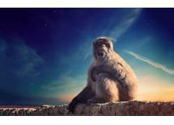 动物,哺乳动物,猴422439