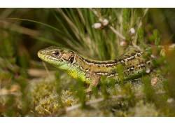 动物,爬行动物,蜥蜴438389
