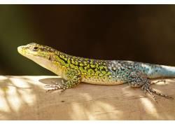 动物,爬行动物,蜥蜴452322