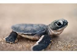动物,爬行动物,龟,小动物438392