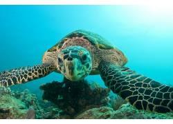 动物,爬行动物,龟455752