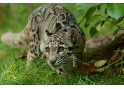 动物,哺乳动物,豹猫448633