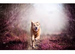 动物,狗,性质,赛跑500403