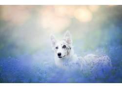 动物,狗,性质528127