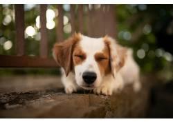 动物,狗,景深,在户外,格,宠物671048