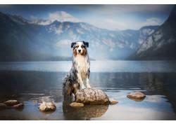 动物,狗,水,反射,山区门票621563