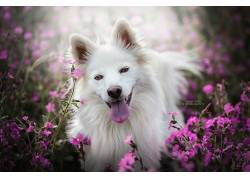 动物,狗,花卉,性质625027
