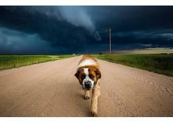 动物,狗,路407596