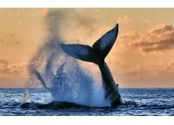动物,天空,海,性质,鲸498965