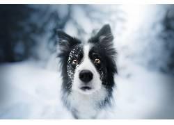 动物,狗,面对,雪624794