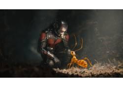蚂蚁人,幻想艺术,电影,蚂蚁287745