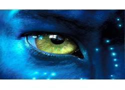 电影,阿凡达,蓝色的皮肤51878